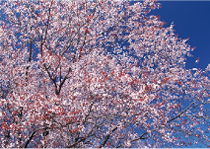 花まつり/四月八日